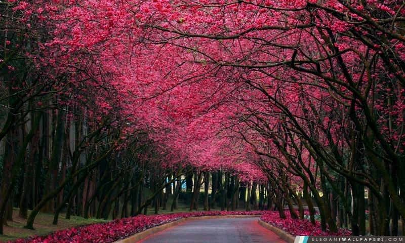 Floraison des arbres Alley, Arrière-plans HD à télécharger