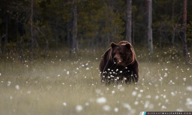 Forest Bear, Arrière-plans HD à télécharger