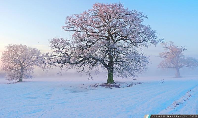 Matin d'hiver, Arrière-plans HD à télécharger