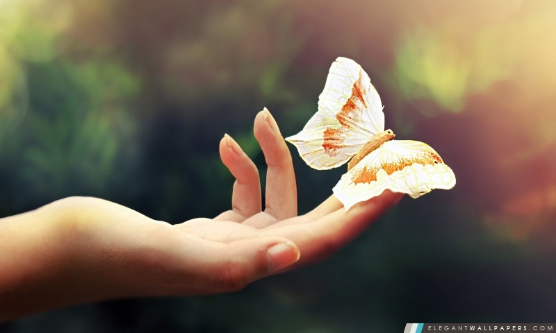 Papillon Blanc, Arrière-plans HD à télécharger