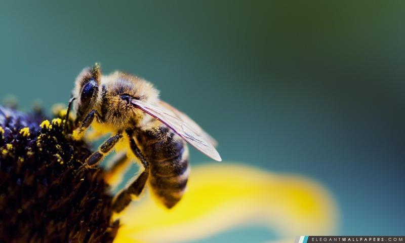 Le pollen d'abeille, Arrière-plans HD à télécharger