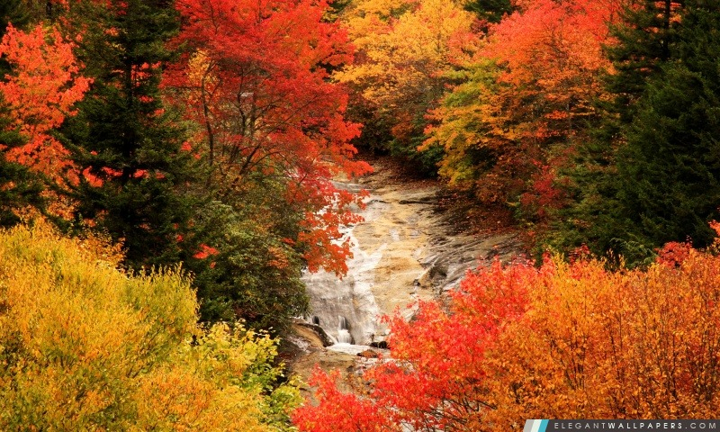 Blue Ridge Parkway, Caroline du Nord, l'automne, Arrière-plans HD à télécharger