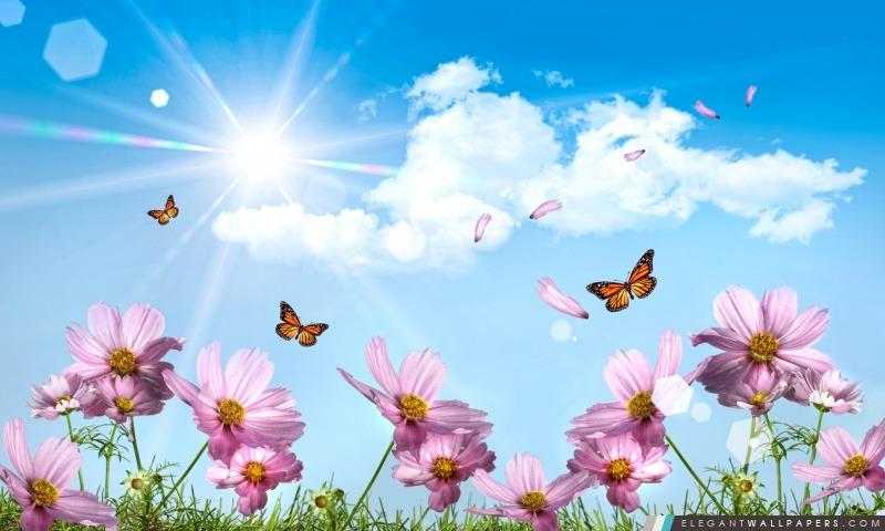 papillons et fleurs de cosmos  fond d u0026 39  u00e9cran hd  u00e0