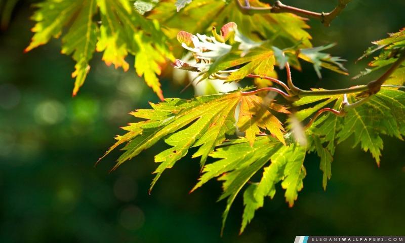 Autumn Leaves intensifs, Arrière-plans HD à télécharger