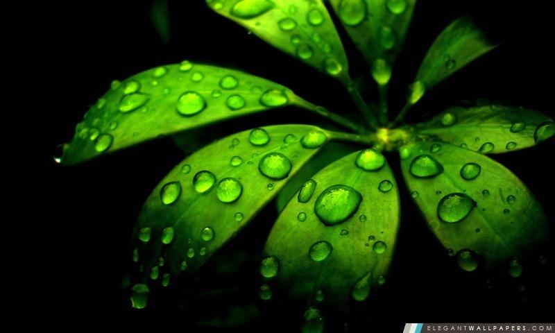 Fleur verte, Arrière-plans HD à télécharger