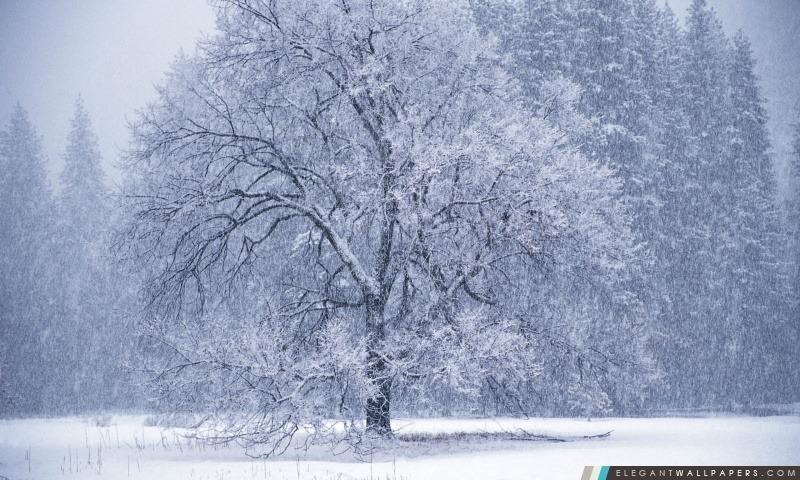 Snow Falling, Arrière-plans HD à télécharger
