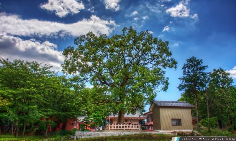 L'arbre Dieu, Arrière-plans HD à télécharger