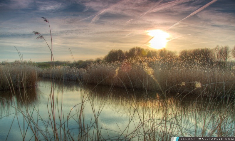 Coucher de soleil à Bieslandse Forêt, Arrière-plans HD à télécharger
