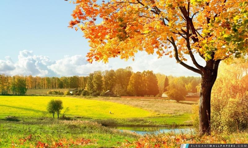 foto de Une belle vue sur les arbres d'automne coloré Fond d