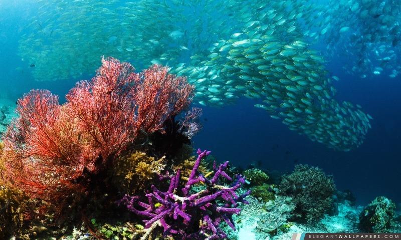 Banc de poissons tropicaux, Arrière-plans HD à télécharger