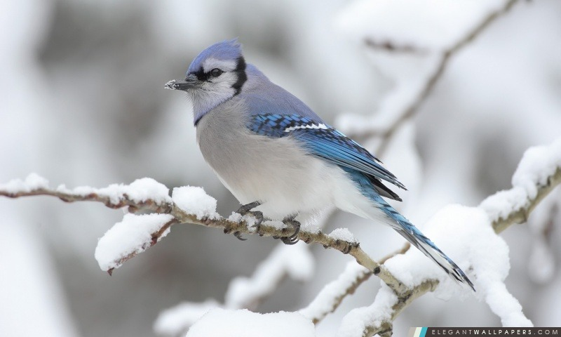 Bel oiseau d'hiver, Arrière-plans HD à télécharger
