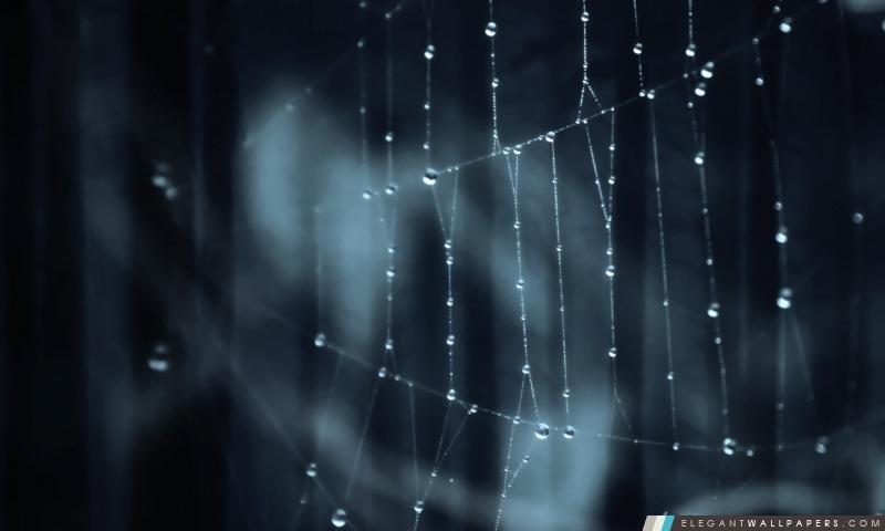 Toile d'araignée, Arrière-plans HD à télécharger