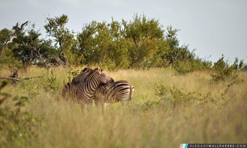 Kruger National Park, Arrière-plans HD à télécharger