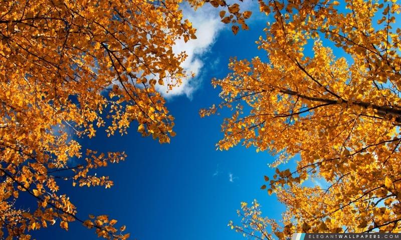 Arbres d'automne jaune, Arrière-plans HD à télécharger