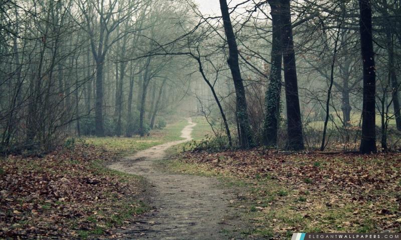arbres sans feuilles arrire plans hd tlcharger - Arbre Sans Feuille