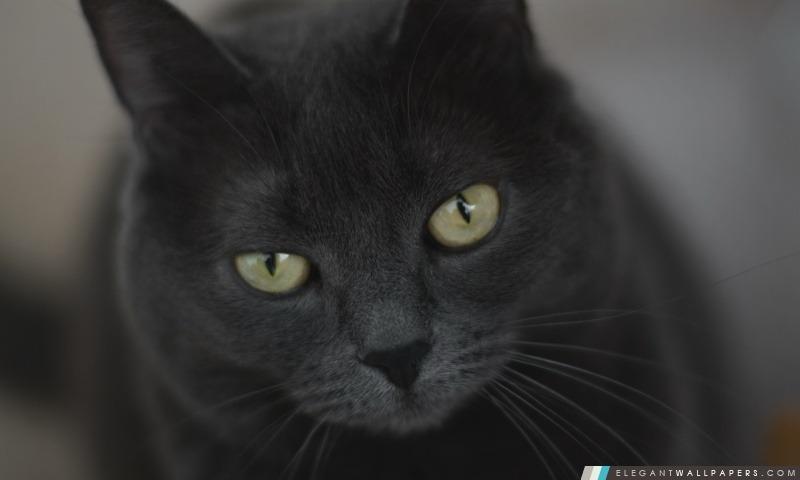 Chat gris avec les yeux verts fond d 39 cran hd t l charger elegant wallpapers - Yeux vert gris ...