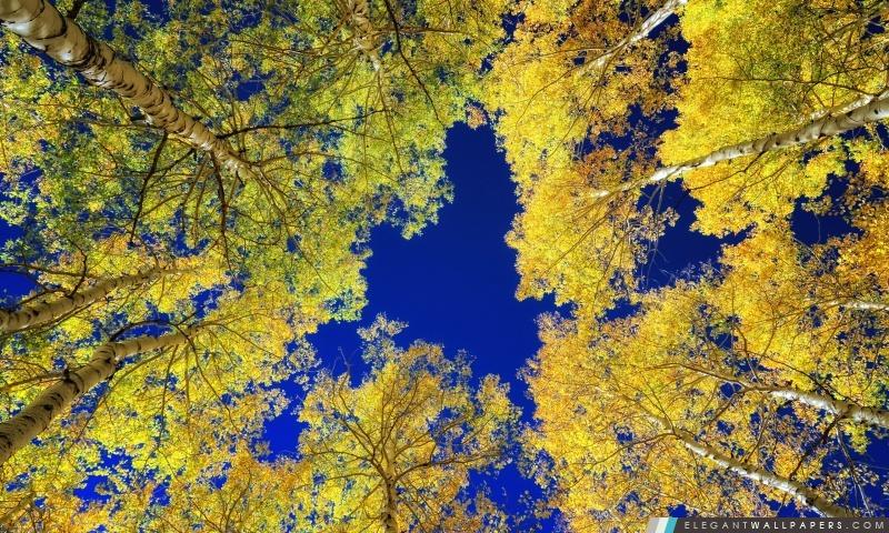 foto de Automne orange feuilles sur un fond vert Fond d'écran HD
