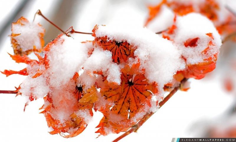 Feuille orange, hiver, Arrière-plans HD à télécharger