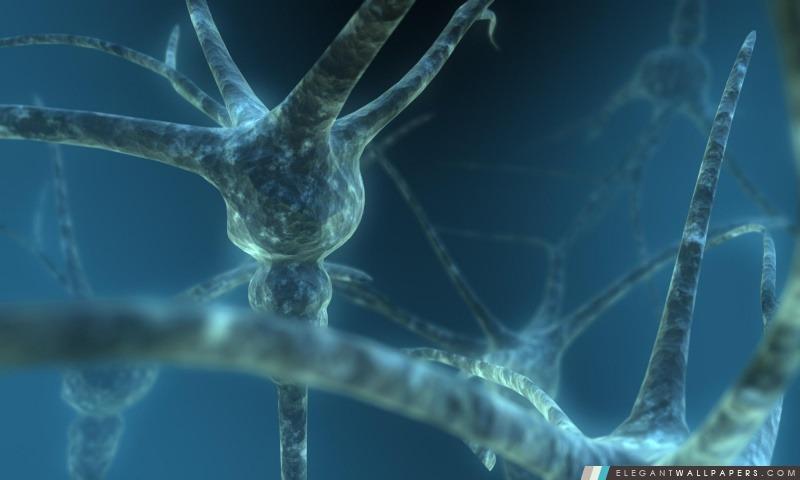 Neuron, Arrière-plans HD à télécharger