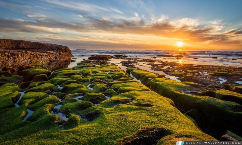 Océan Pacifique Roches Vertes, Arrière-plans HD à télécharger
