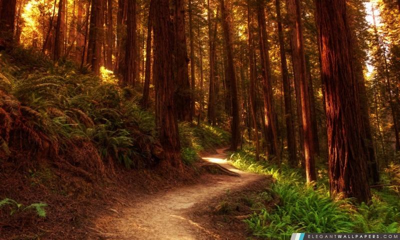 Chemin forestier, Arrière-plans HD à télécharger