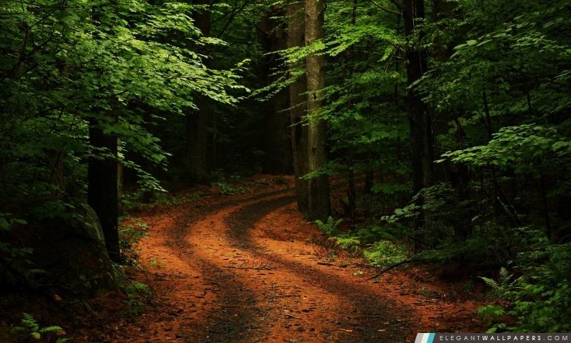 Belle Chemin forestier, Arrière-plans HD à télécharger