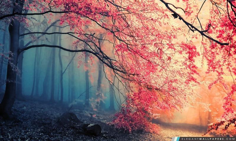 Forêt Couleurs d'automne, Arrière-plans HD à télécharger