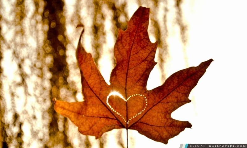 Amour d'automne, Arrière-plans HD à télécharger