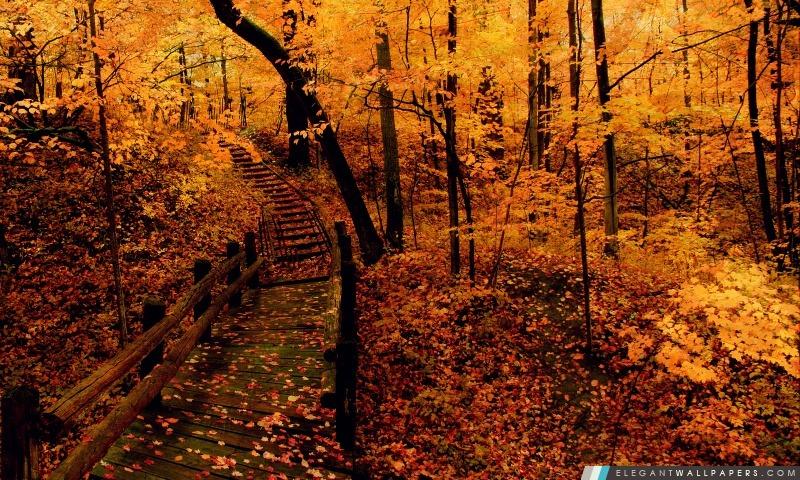 Forêt Jaune, Arrière-plans HD à télécharger