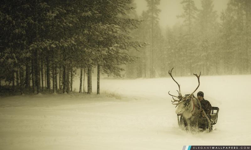 Laponie Renne tour, Arrière-plans HD à télécharger
