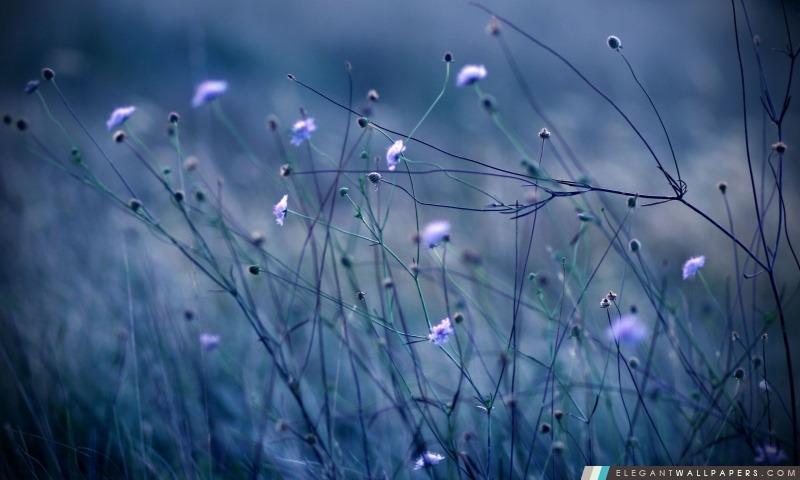 Fleurs Tiges, Arrière-plans HD à télécharger