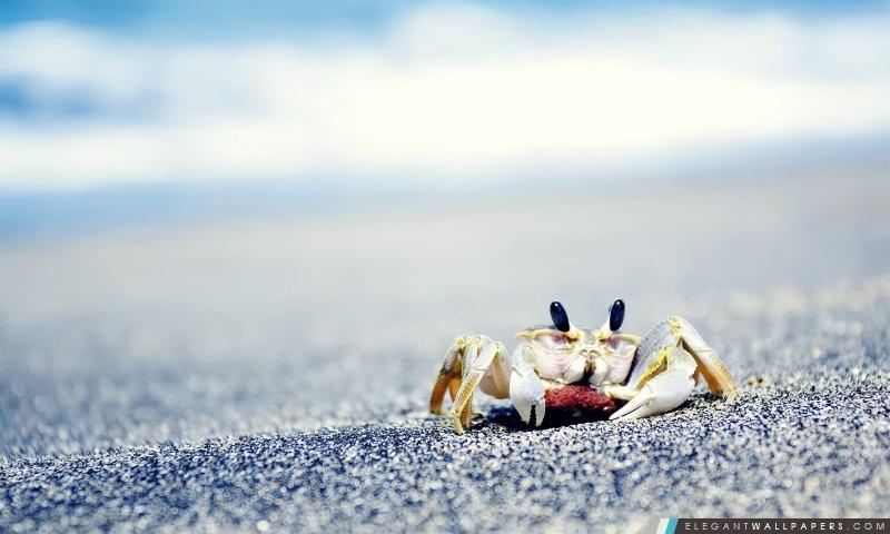 Crabe Sur Mer, Arrière-plans HD à télécharger