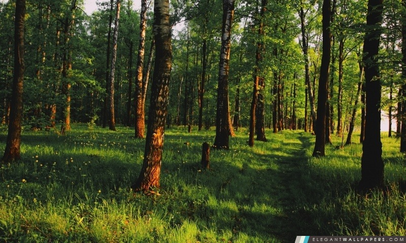 Belle forêt, Arrière-plans HD à télécharger