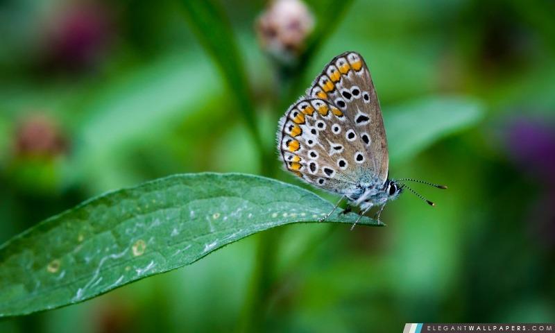 Papillon sur la feuille, Arrière-plans HD à télécharger