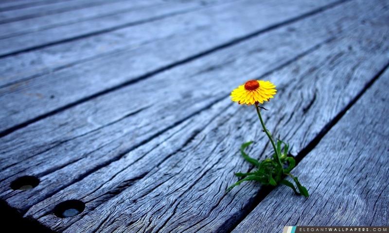 Fleur Entre planches de bois, Arrière-plans HD à télécharger