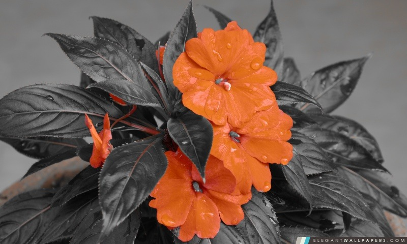 Fleur, Arrière-plans HD à télécharger