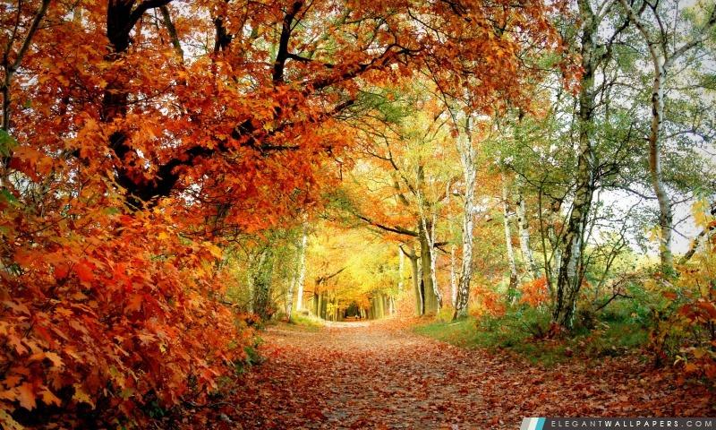 Parc automne, Arrière-plans HD à télécharger