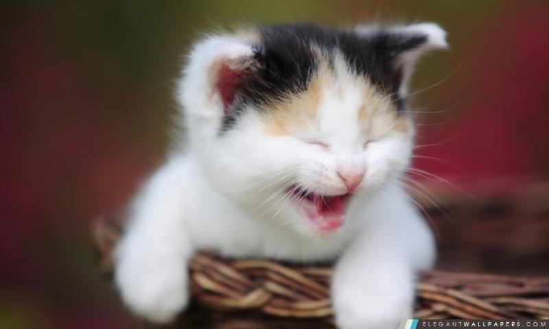 Cute Kitty Pleurer, Arrière-plans HD à télécharger