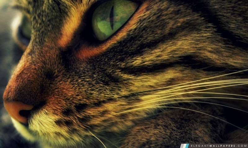 Chat, Arrière-plans HD à télécharger