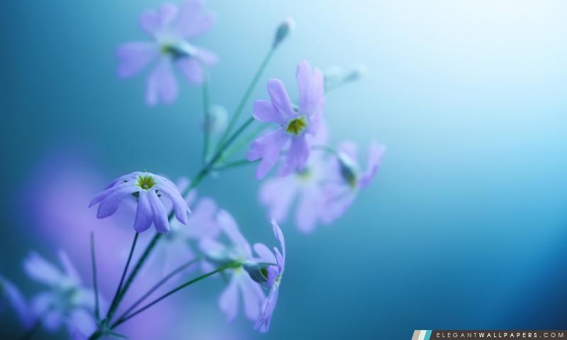 Délicat Violet Fleurs, Arrière-plans HD à télécharger