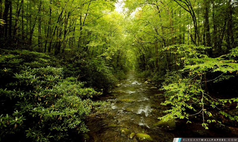 Jeune belle forêt, Arrière-plans HD à télécharger