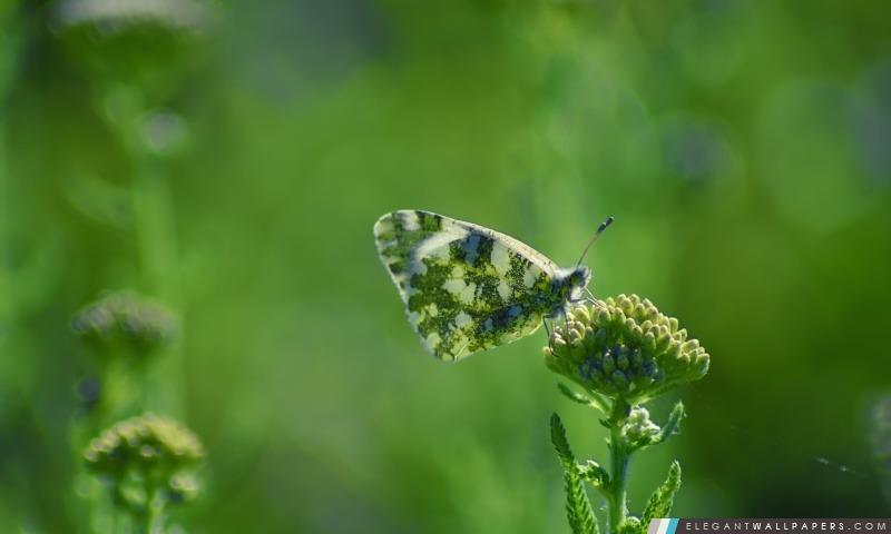 Papillon, Arrière-plans HD à télécharger