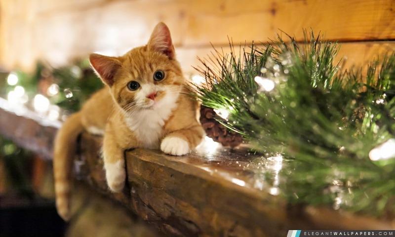 En attente de cadeaux de Noël, Arrière-plans HD à télécharger