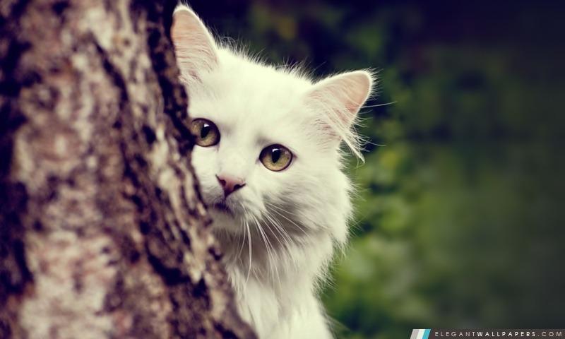 Cat espionnage, Arrière-plans HD à télécharger