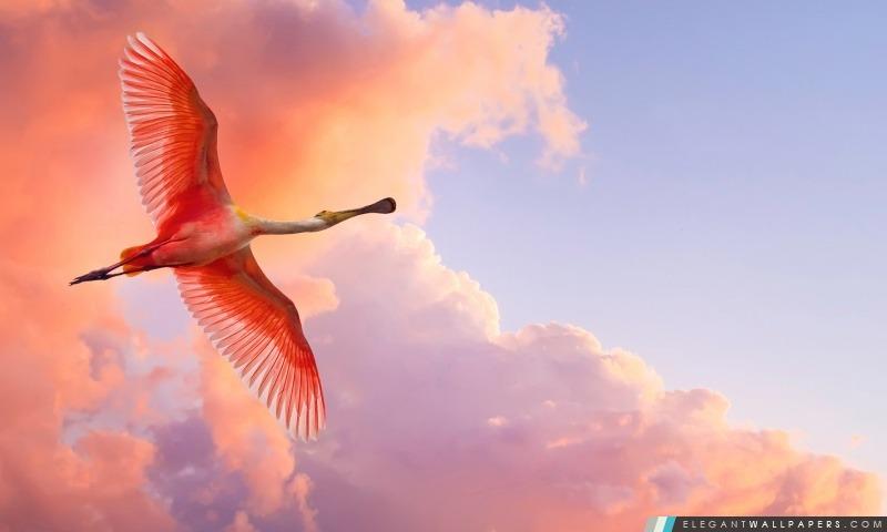 Rose Flying Bird, Arrière-plans HD à télécharger
