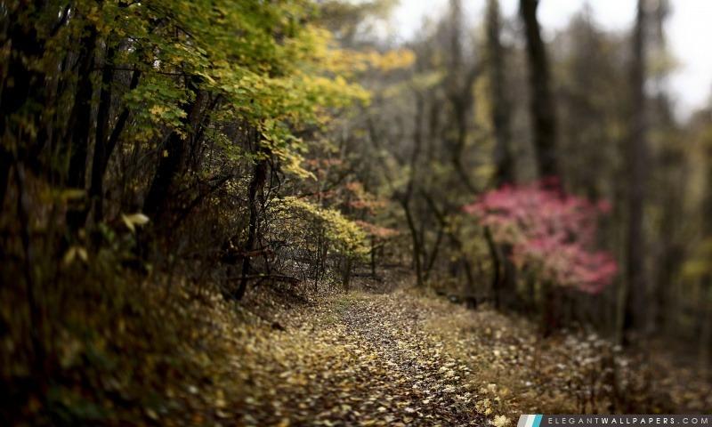 Forêt Sentier, Arrière-plans HD à télécharger