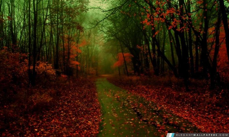 Misty automne, Arrière-plans HD à télécharger