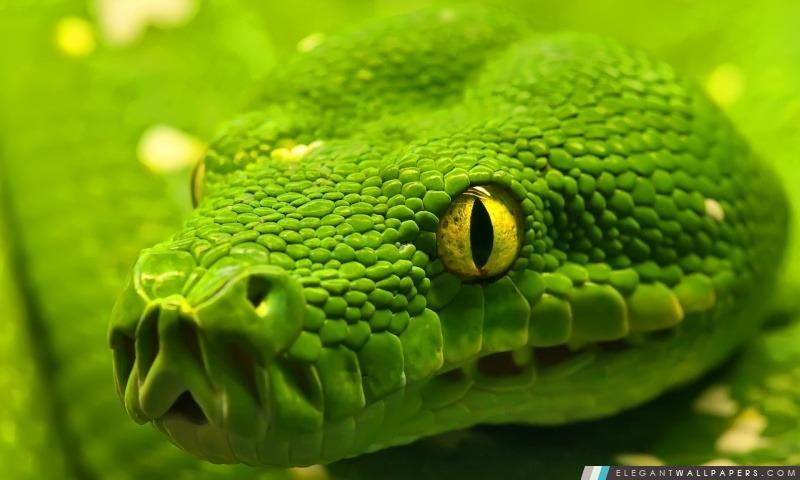 Green Snake Head, Arrière-plans HD à télécharger