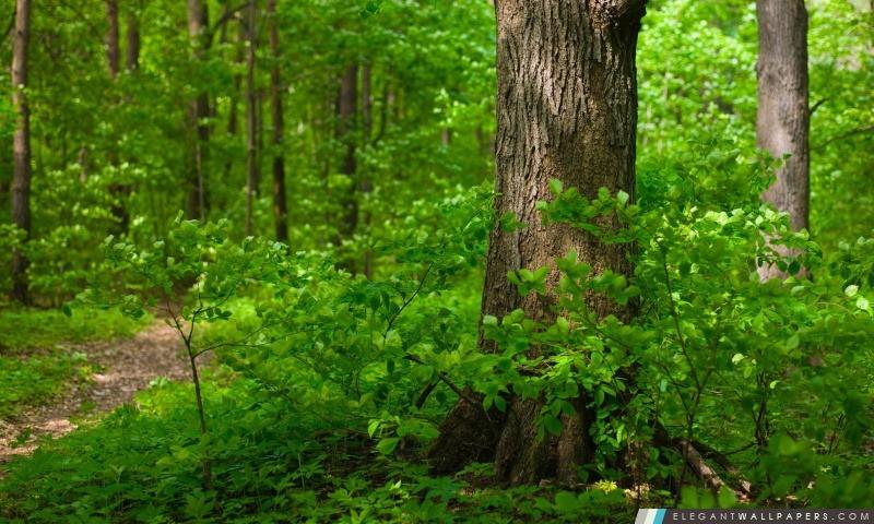 Jeune forêt, été, Arrière-plans HD à télécharger