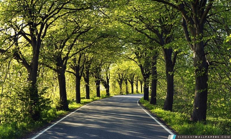 Route parmi des arbres, Arrière-plans HD à télécharger